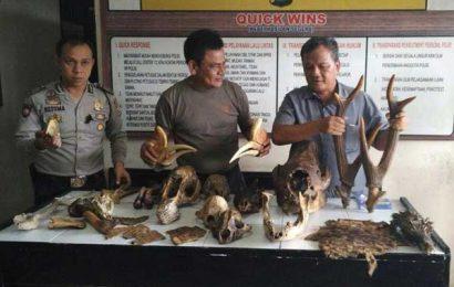 Polisi Sita Organ Tubuh Satwa Dilindungi